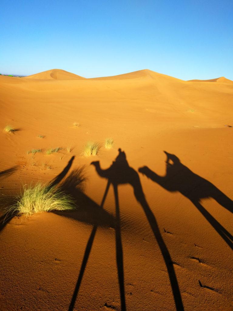 Camel caravan shadows in the desert