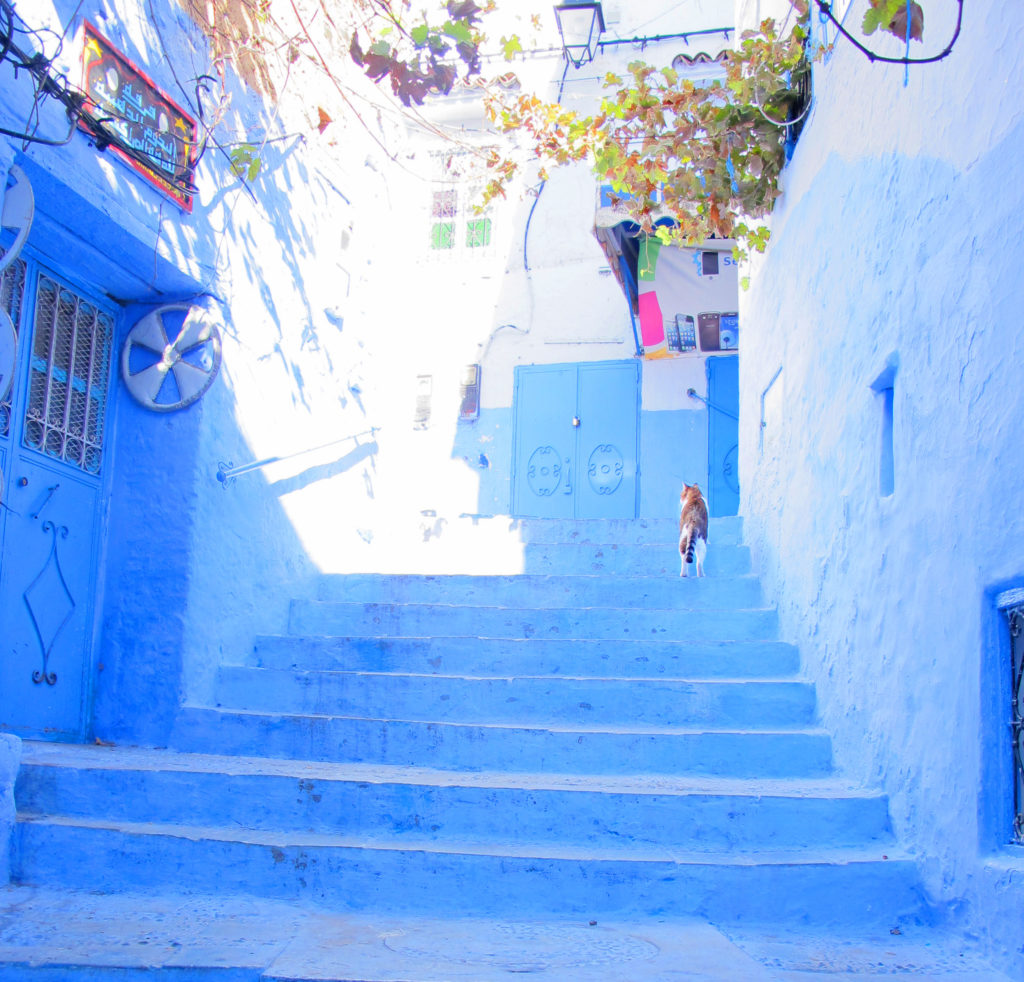 Blue alley cat in Chefchaouen